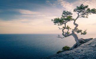 Mindfulness-570x350.jpg